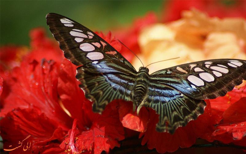 آشنایی با پارک پروانه های کوالالامپور
