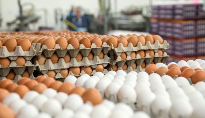 ستاد تنظیم بازار قیمت جدید تخم مرغ را بیان نمود