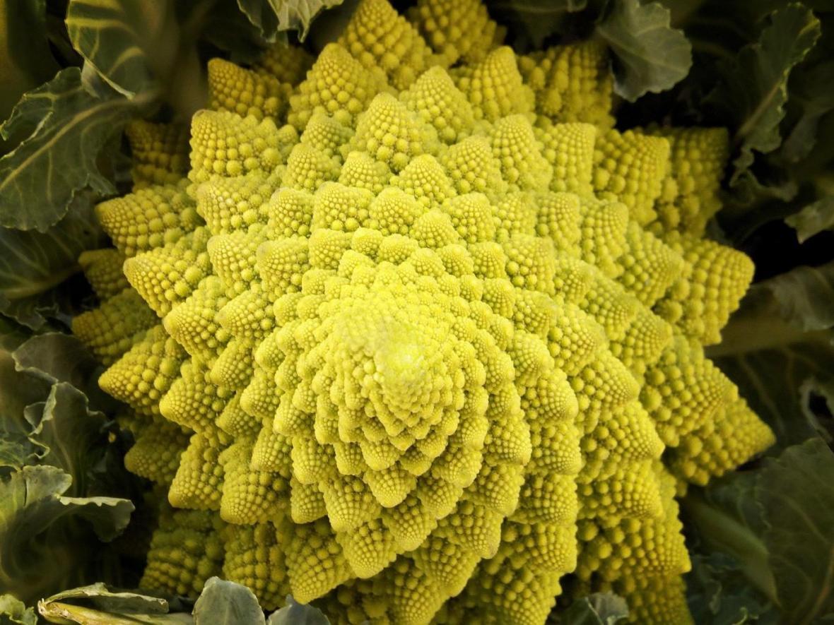 تصویر عظیم گل کلم چه ربطی به راز کیهان دارد؟